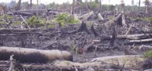 Pengertian Pencemaran Lingkungan Negarahukum Com